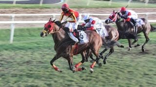 Back to back Sandy Lane Barbados Gold Cup for Dorsett (USA)