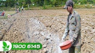Trồng trọt | Ngăn cản sự hình thành đất trồng lúa bị phèn, chua