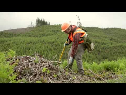 Harvest Methods: Clearcutting