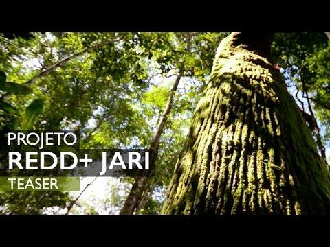 Projeto REDD+ Jari