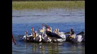 ETHIOPIA HIGHLIGHTS-ABAYA LAKE-BIRDS PARADISE