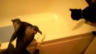 Vãi cờ hó, đẩy mèo xuống bồn tắm :))