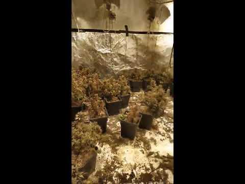 המשטרה חשפה מעבדת הידרו בקיסריה