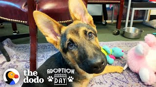 Very Special German Shepherd Puppy Finds A Brother Who Just Gets Him | The Dodo Adoption Day by The Dodo