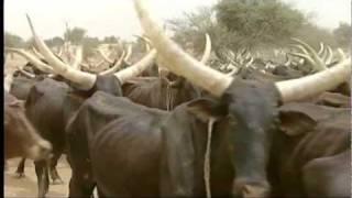 Kenya's Maasai remember rinderpest