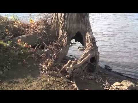 One Ugly Scary Horror Movie Tree Riverside Park
