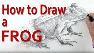 In this art tutorial I'll teach you how to draw a frog / toad starting from very simple shapes. My step by step approach is ideal for children and beginners and those looking to improve their drawing skills. You will learn how by using oval and cylinder shapes you can get the basic shape of the frog. From here, I show how to add an outline that reflects the lumpy slimy skin of the frog. Adding shading in a variety of tones completes the from before finishing the drawing with a piece of graphite. The graphite is used to create a background which in turn converts the edges into outlines.This art tutorial is designed for beginers, children and students wishing to develop their drawing skills.To see more of my videos visit: http://www.art-tutorialsonline.com