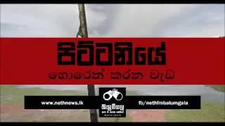 Balumgala 2016 12 15