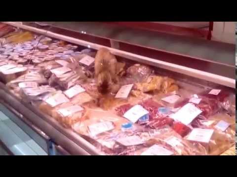 Кошка ест морепродукты в прилавке магазина в аэропорту Владивостока
