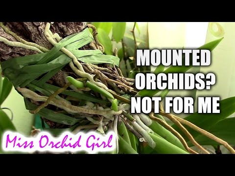 Giving up mounted Orchids - Final thoughts (видео)