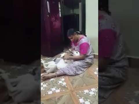 Video Apna Apna Naseeb download in MP3, 3GP, MP4, WEBM, AVI, FLV January 2017