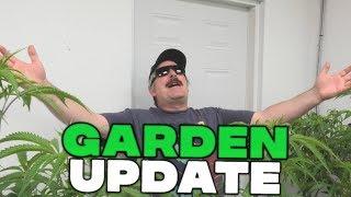 Remo's Garden Update (Day 1 Flower) by Urban Grower