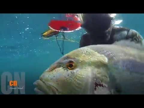 Pescasub bel dentice al volo