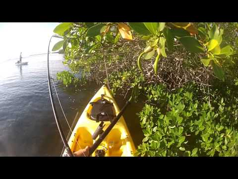 Snapper Of Topwater! - kayak fishing, kayak photos, kayak videos