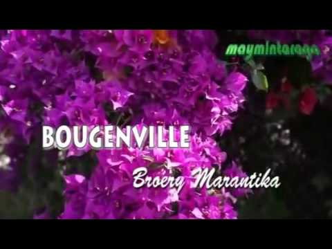 Bougenville Mp3