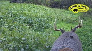 Very BEST Time Lapse Images - White tail Deer Food Plots SouthEast View 2011