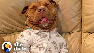 Proof That Pit Bulls Are Big Babies | The Dodo by The Dodo