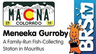 A family-run fish collecting business in Mauritius by Meneek Gurroby-MACNA-2014