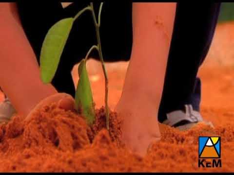 الزراعة مستقبل بلادنا الزاهر