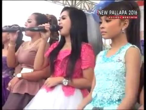 Video New Pallapa SNP All Artist download in MP3, 3GP, MP4, WEBM, AVI, FLV January 2017