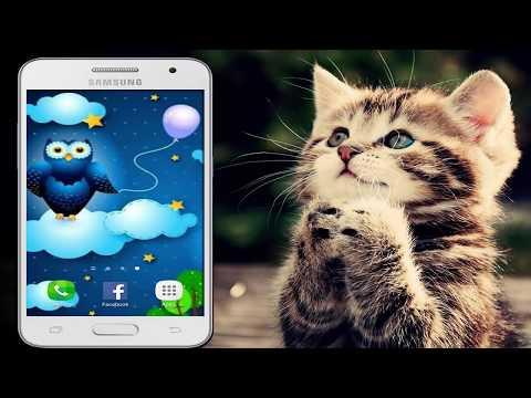 Status bonitos para Whatsapp -  Saiu! Frases Prontas para Usar no, WhatsApp/ Facebook/ Twitter e Snapchat Grátis