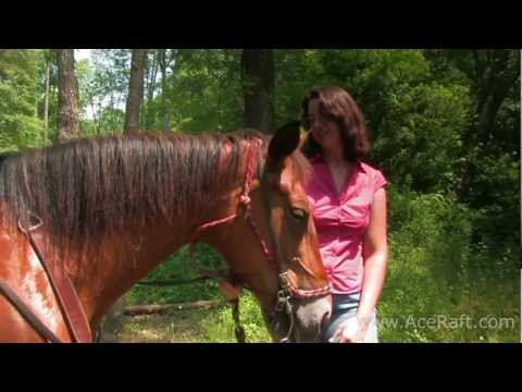 Horseback Guided Rides | ACE Adventure Resort