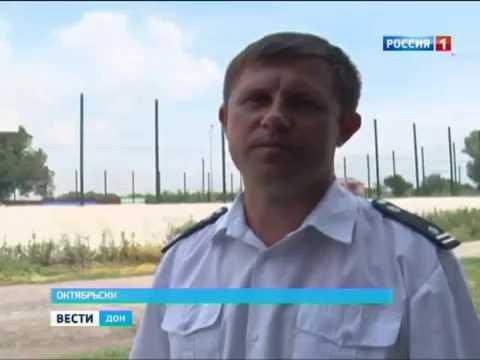 Очаг карантинного растения обнаружен и уничтожен в Ростовской области