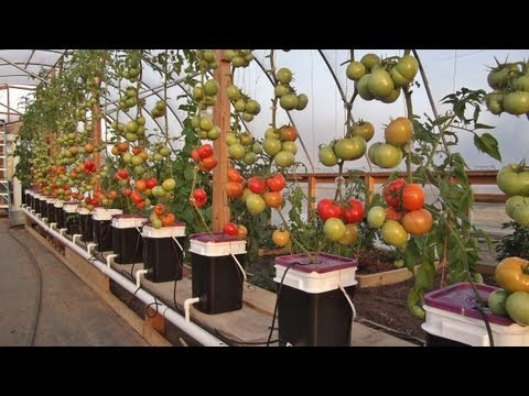 Dutch Bucket Hydroponics - Tips & Expanding the Reservoir