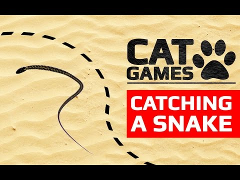 CAT GAMES - CATCHING A SNAKE (ENTERTAINMENT VIDEOS FOR CATS TO WATCH)