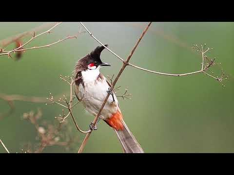 Sigma 500 mm F4 Lens Sample Images | Bangalore Birding