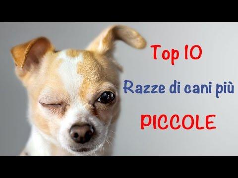 le 10 razze di cani più piccole del mondo!