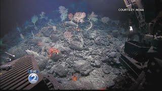 Obama laver verdens største beskyttede havområde
