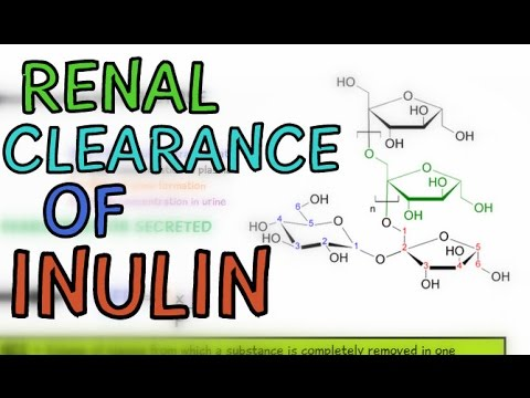 Renal Clearance of Inulin