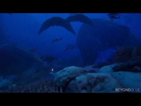Underwater Relaxation 4K de Beyond Blue