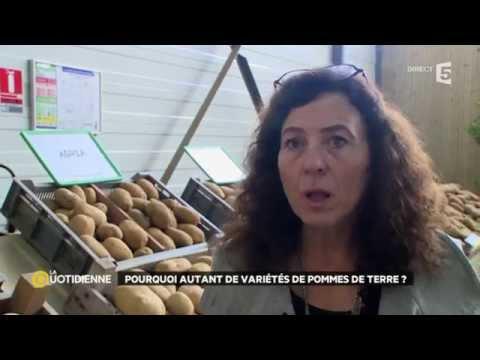 Pourquoi autant de variétés de pommes de terre ?