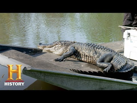 Swamp People: The Molineres Catch Up to Houdini (Season 9, Episode 4)   History