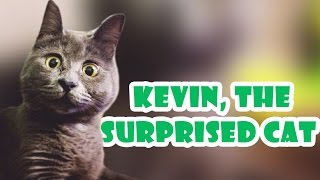 Official instagram of Kevin! : https://www.instagram.com/theadventuresofkev/ Kevin I am a 4 year old Russian Blue with hydrocephalus and I'm a little bit silly (but ...