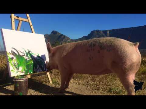 (VIDEO) Pigkaso je preživeo Božić i sada stvara umetnička dela data-original=