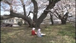 高森南小学校の桜は日本一の学校桜