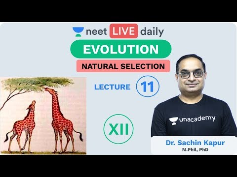 Evolution - Lecture 11 | Natural Selection | Unacademy NEET | LIVE DAILY | Biology | Sachin Sir