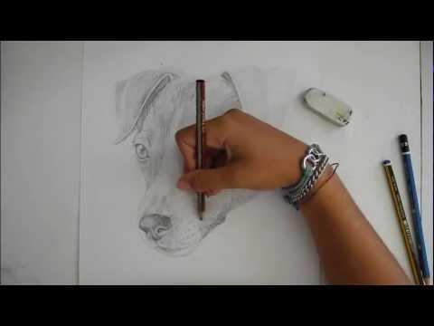 Jack russel terrier disegno libero for Disegni a matita di cani