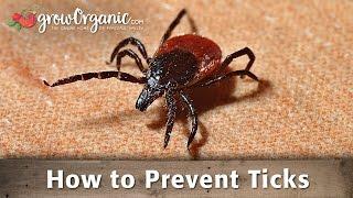 How to Prevent Ticks