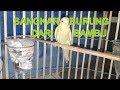 Membuat Sangkar Burung dari Kipas angin dan Bambu