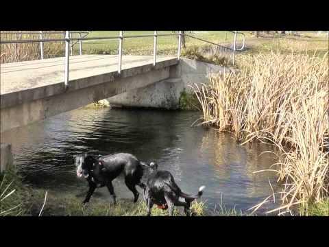 Brilliant Dogs