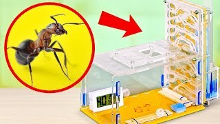 How to Build an ANT FARM AT HOME