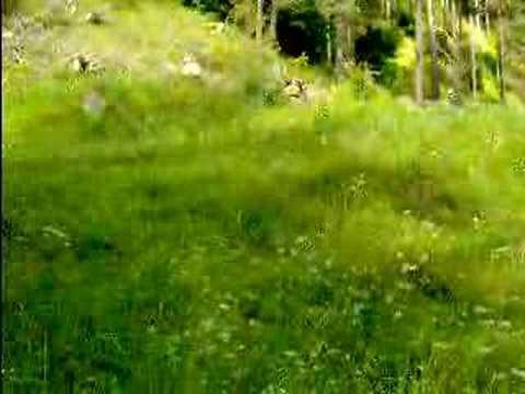 The Rodopi Mountans (видео)