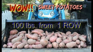 WOW!!!! Just the first row of our sweet potato patch and we harvested 100 lbs.!!! Watch as Danny digs the sweet potatoes. Such an awesome harvest of sweet potatoes. Check out our playlist on sweet potatoes called Sweet potato Plant to Table   https://www.youtube.com/playlist?list=PLfy5IxZ1NtN9BZuuHCJ3oBKkn4DTQEkes*****To order DSH T shirts and caps: http://stores.inksoft.com/Deep_South_Homestead/All-Products/-1   ***** Sweet Potato Manuel  to order deepsouthhomestead.etsy.com***RV wish list on amazon:https://www.amazon.com/gp/registry/wishlist/2UGP9L4YO9AD6/ref=cm_wl_list_o_1How to contact Deep South HomesteadP O Box 462 Wiggins, MS 39577email:  wankingdan20@gmail.comwebsite:  deepsouthhomestead.comemail: info@deepsouthhomestead.comCheck us out on Facebook, Instagram, and PintrestAmazon affiliate link:  http://amzn.to/2kwUu6h (Use this link at no extra charge and we get a small credit)*****Paypal account:  wankingdan20@gmail.com (If you wish to support projects on our homestead, use this account)Greenhouse panels from ONDULINE North America :  www.tuftexpanel.comHOSS TOOL  affiliate link:  http://www.shareasale.com/r.cfm?B=862842&U=1327136&M=65739&urllinkAlso check out our Bible channel  ALL GOD'S CHILDRENhttps://www.youtube.com/channel/UCv6KuZYC9GwU6JhTgEShYUg#deepsouthhomestead #homestead#offgrid #solar#rv#rvremodel#frugal#bushcrafting#porchtime