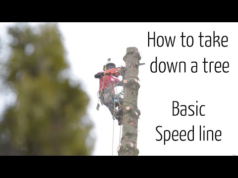 How we take down a tree #1 : Tree removal using a basic speedline