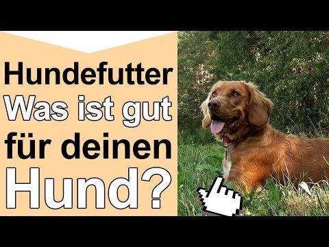 Hundefutter - Was ist gutes hochwertiges Hundefutte ...