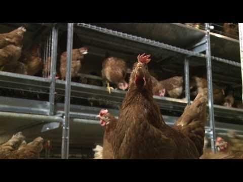 Learn more about Willamette Egg Farms' sustainable practices